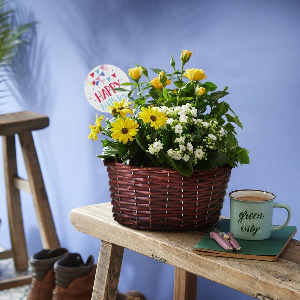 Image 1 of 2 of Happy Birthday Radiant Yellow Planter