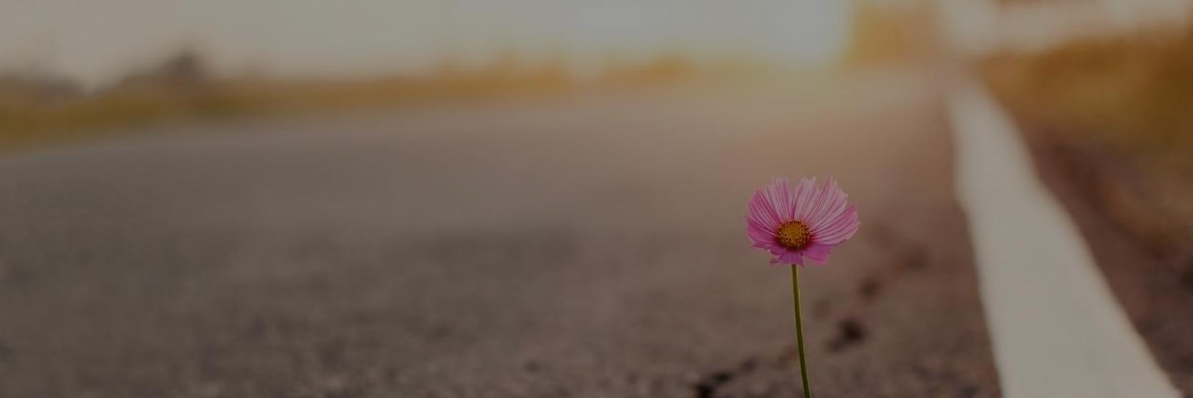 Flower in Road