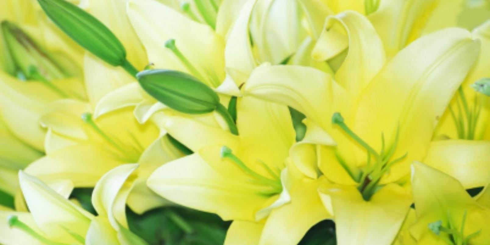 Green Daylilies