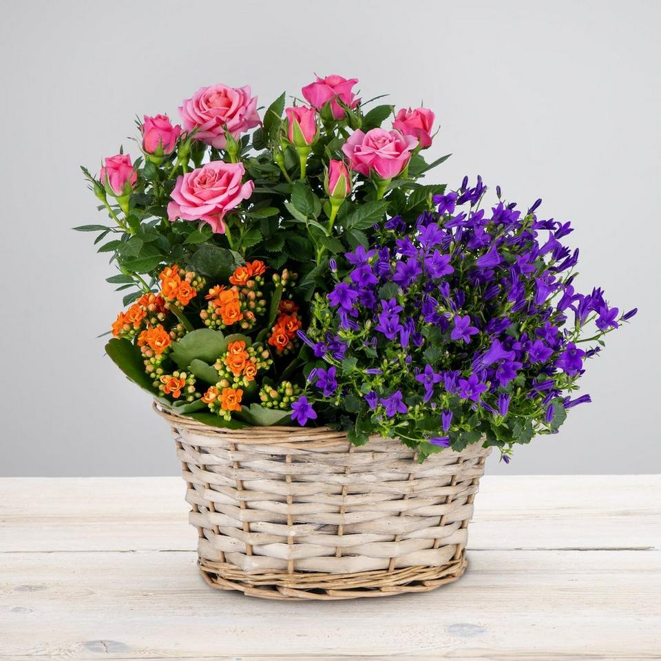 Image 1 of 3 of Vibrant Autumn Planted Basket