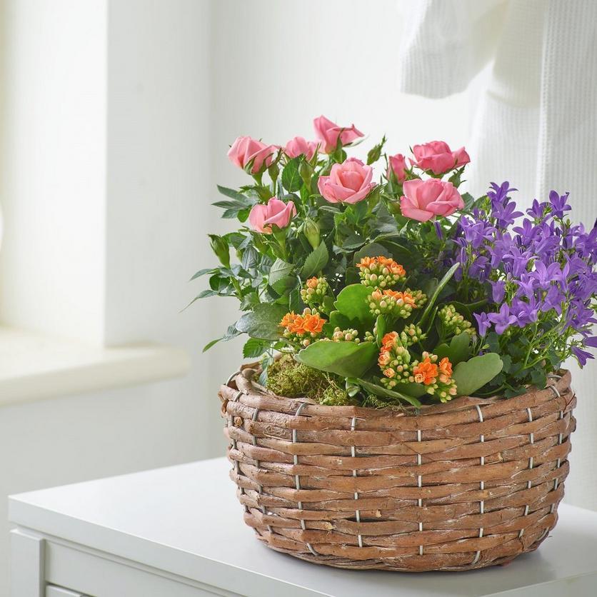 Interflora11052189248_CROP