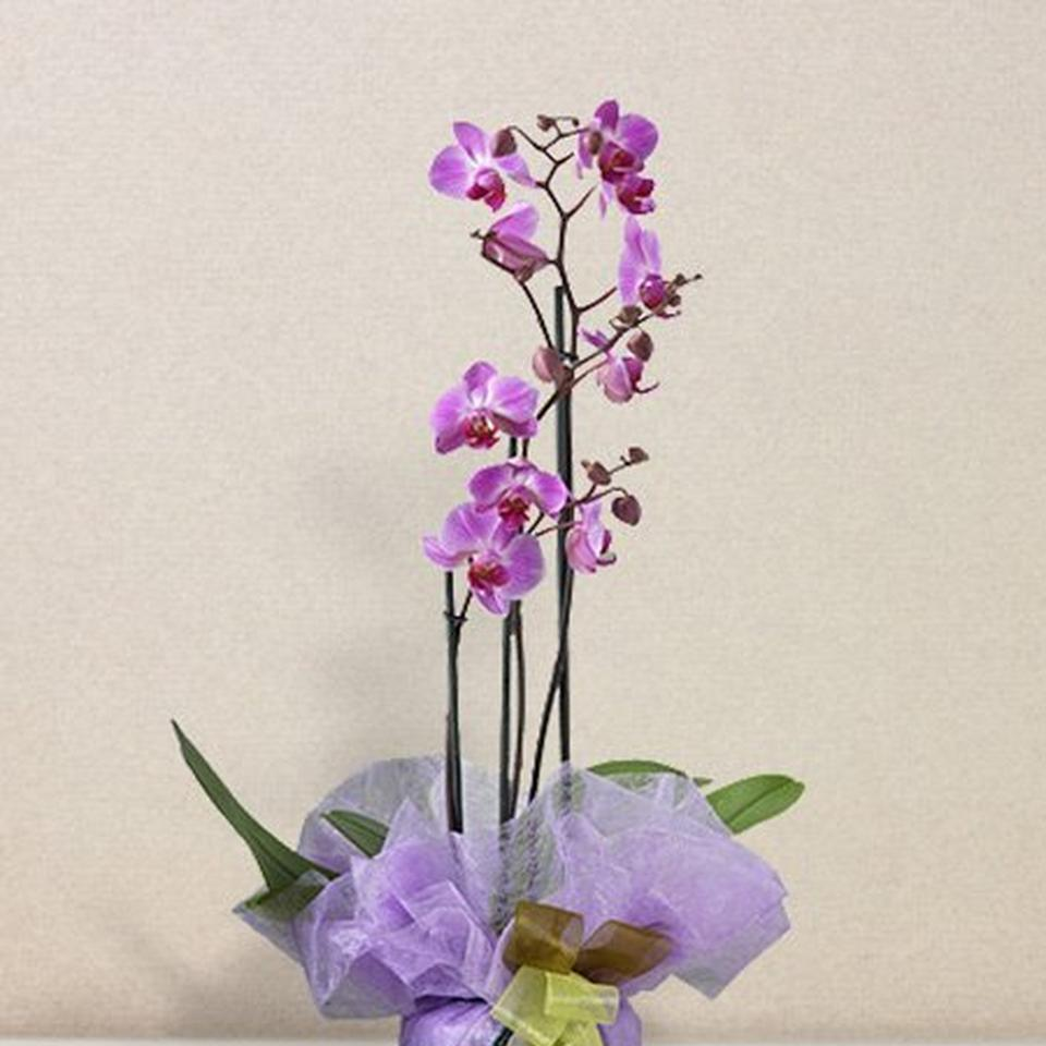 Image 1 of 1 of Orchidea rosa