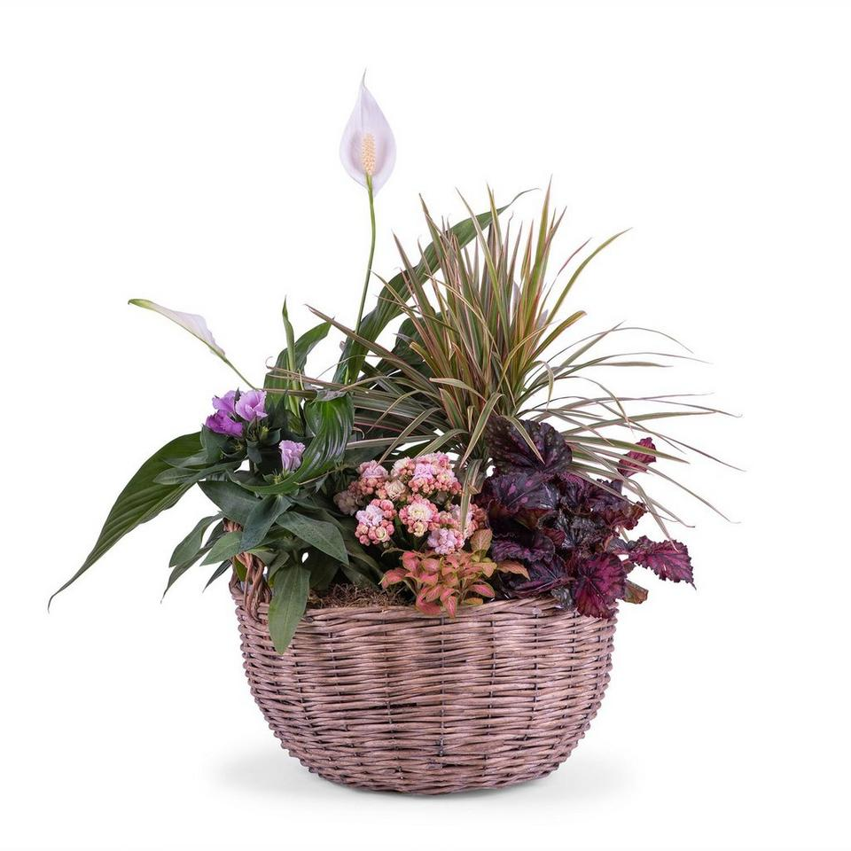 Image 1 of 1 of Centrepiece of Mixed Plants