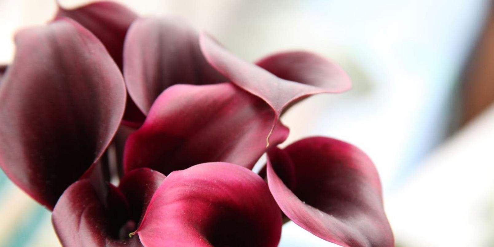 Pink-flowers-2
