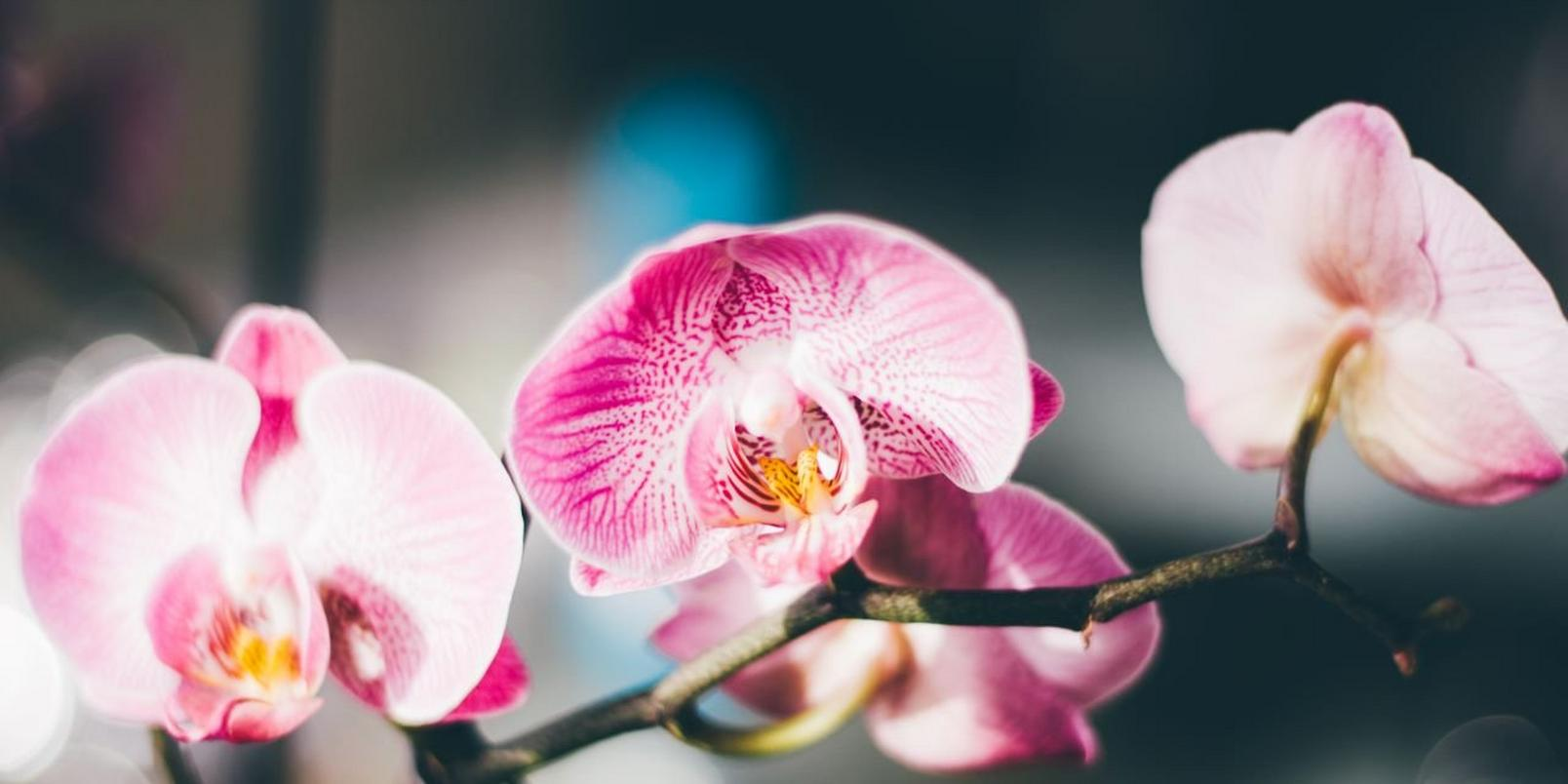 Pink-flowers-8