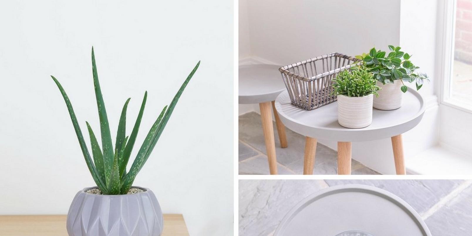 Scandinavian-style-plants