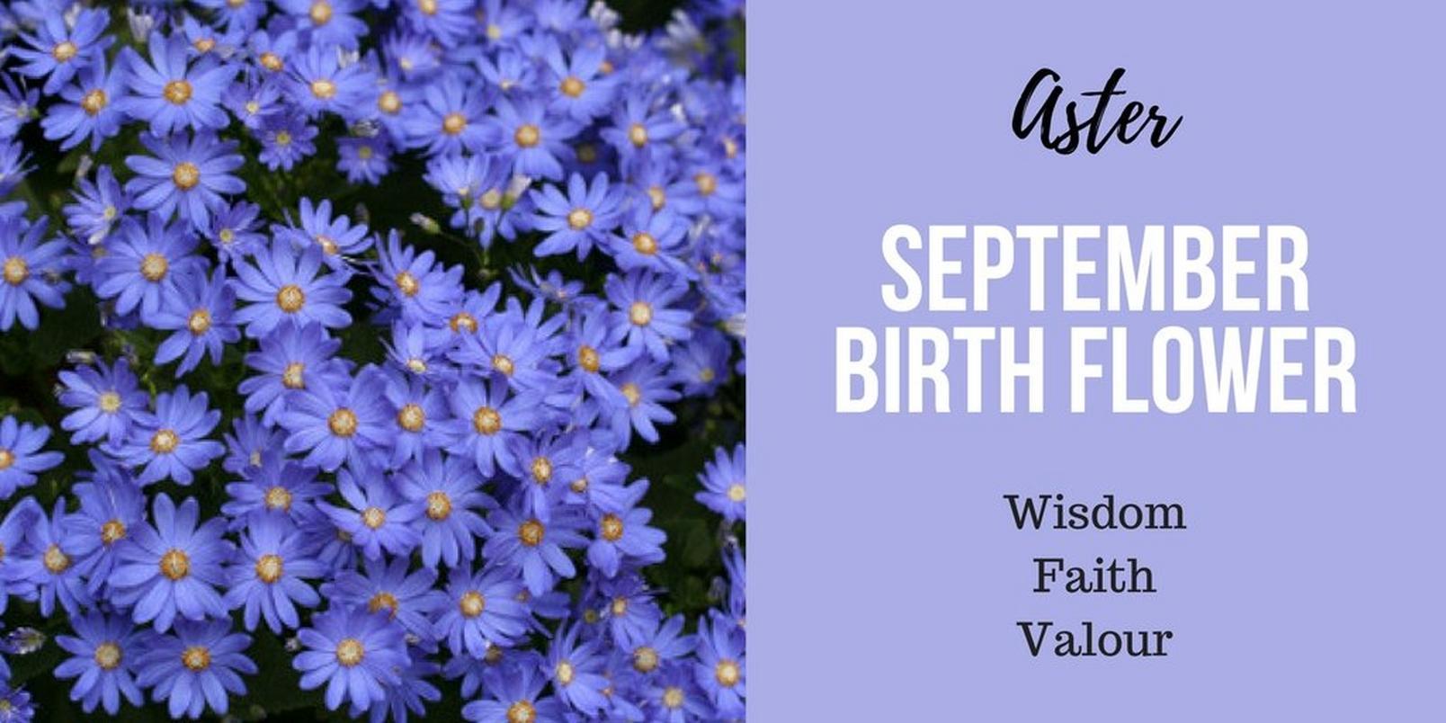 September-birth-flowerff