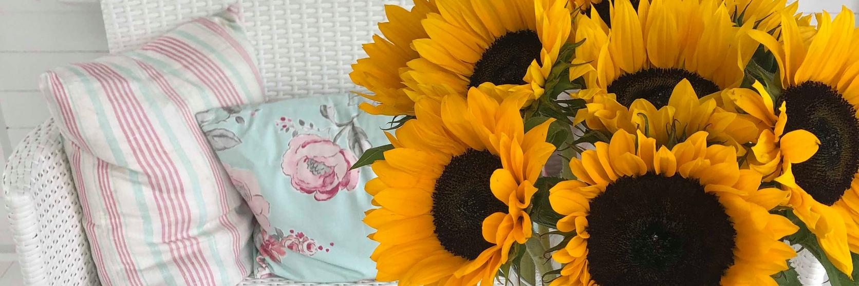 care-tips-sunflowers-ultimate-guide