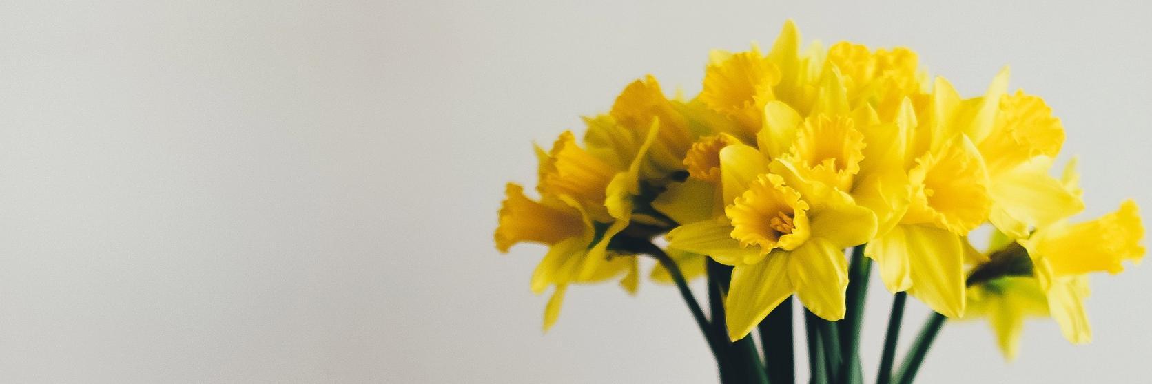 daffodil-spring-flowers