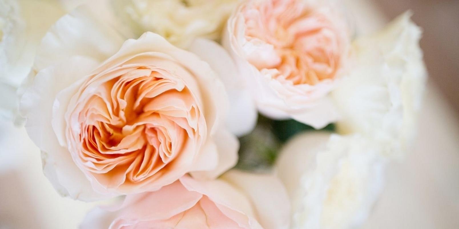 garden_roses