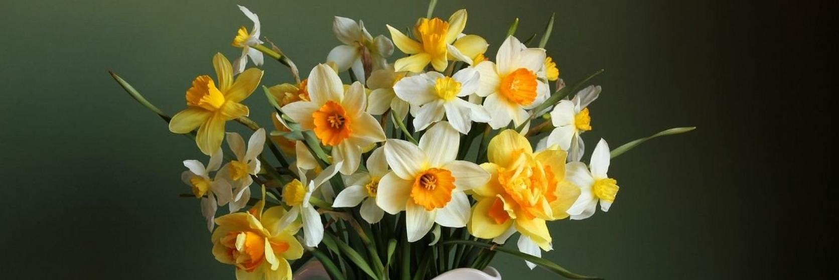 jug_of_daffodils