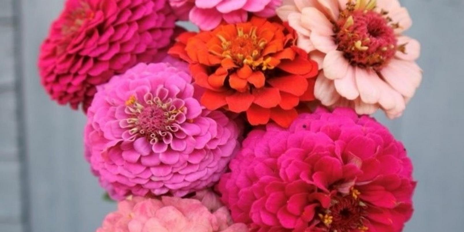 mindfloral-gardening-therapy-kirsty-ward-1