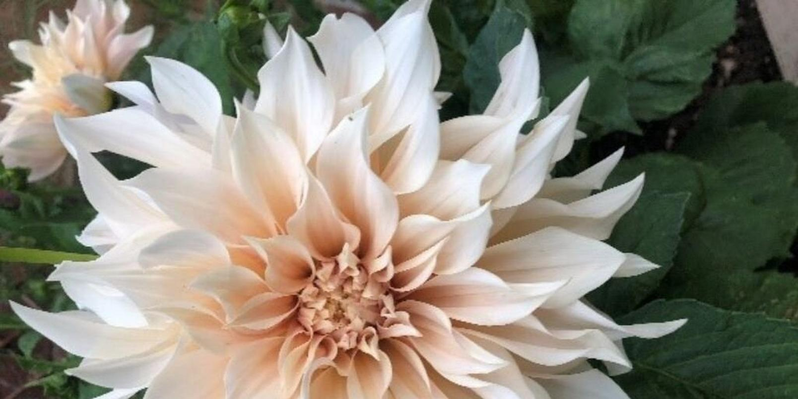 mindfloral-gardening-therapy-kirsty-ward-5