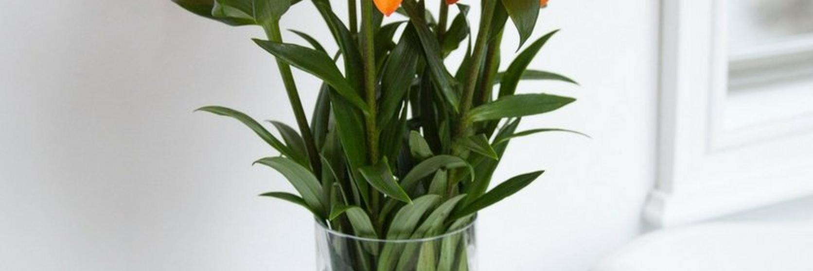 orange-lilies-in-a-vase