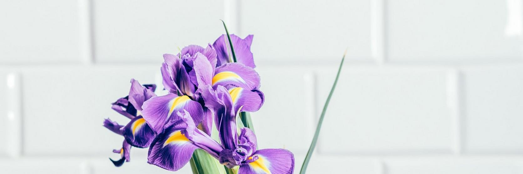 purple-iris-bouquet