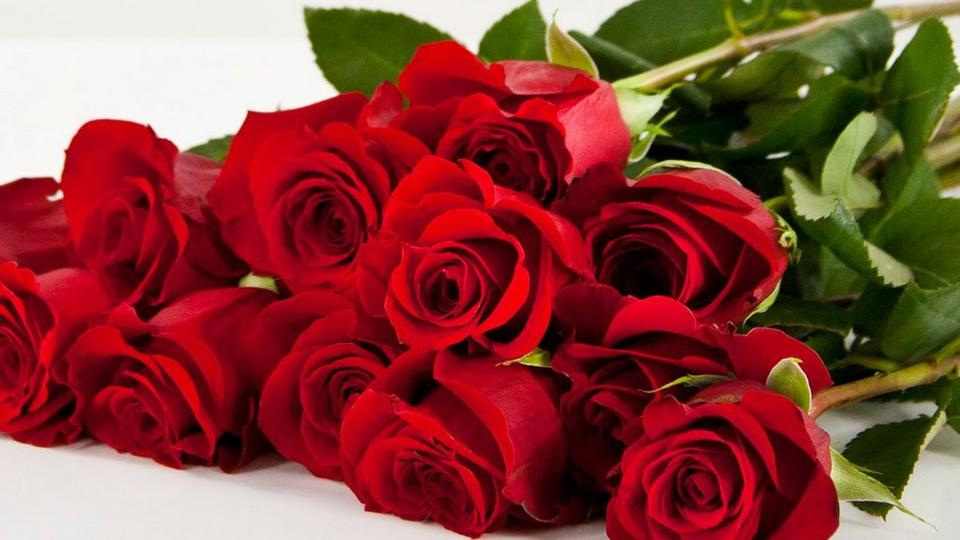 red roses new