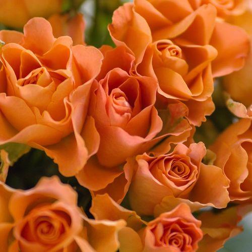 seven-orange-roses