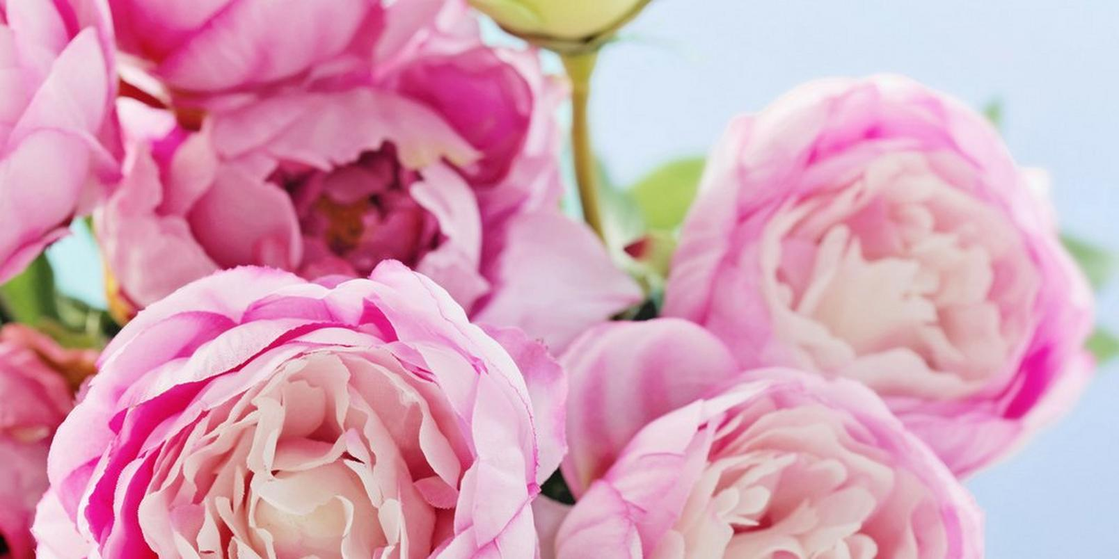 top-hay-fever-friendly-flowers-3