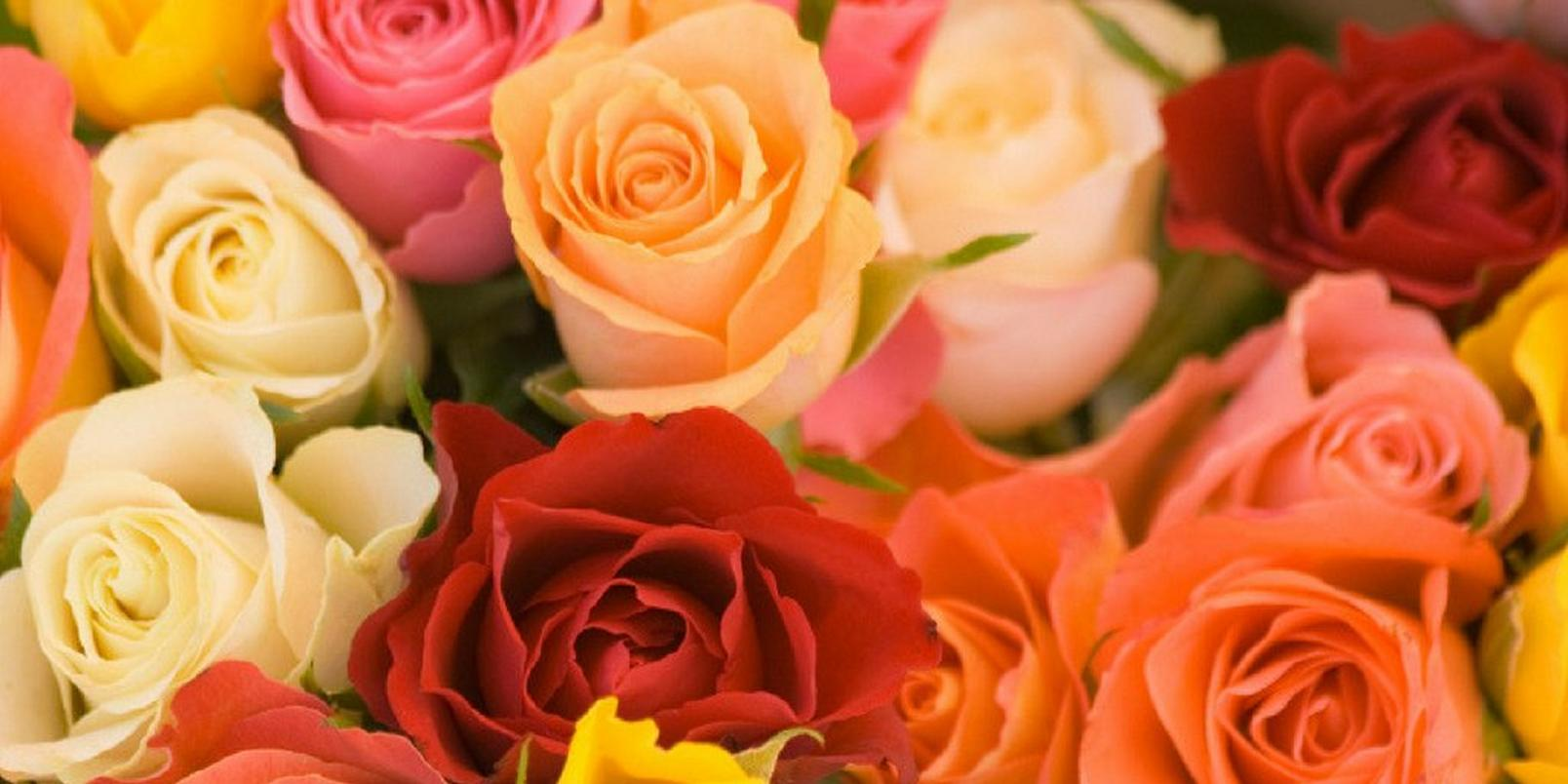 top-hay-fever-friendly-flowers-4