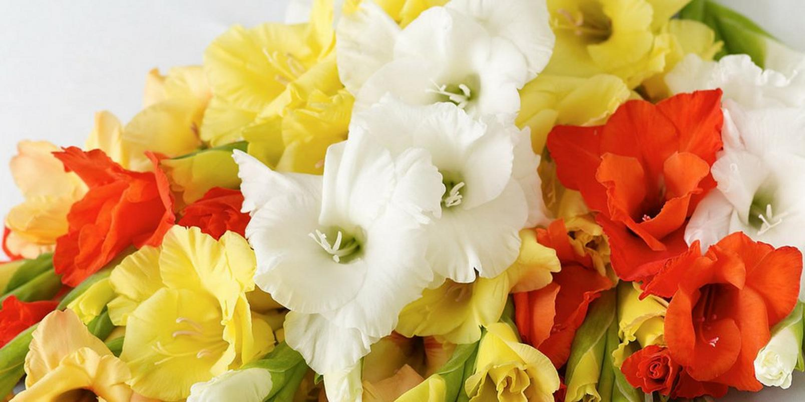 top-hay-fever-friendly-flowers-5