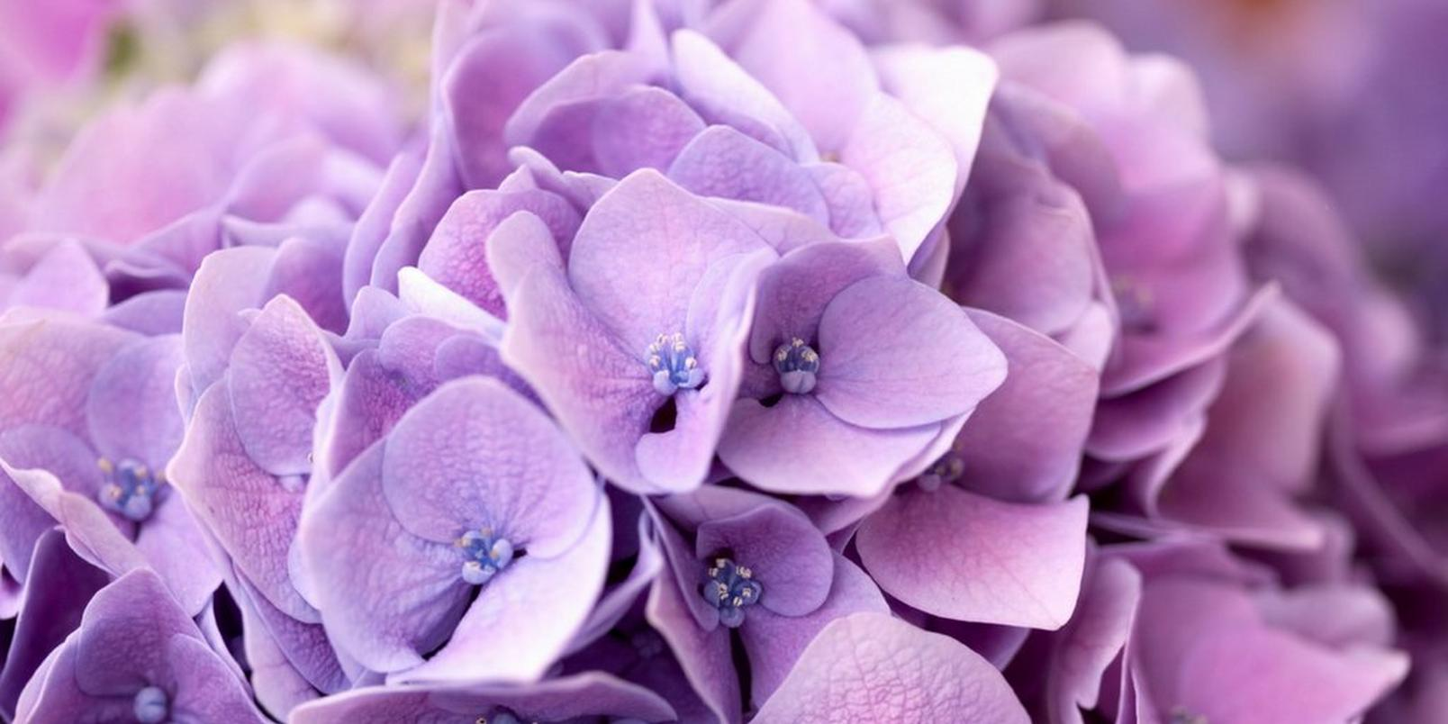 top-hay-fever-friendly-flowers-7