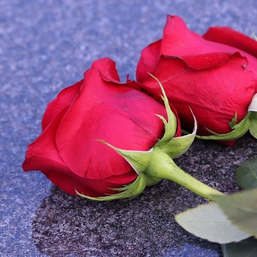 two-red-roses-4210620_1920